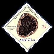 Angola 1970 Fossils and Minerals from Angola d