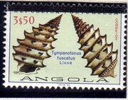 Angola 1981 Sea Shells Overprinted e