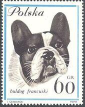 Poland 1963 Dogs e