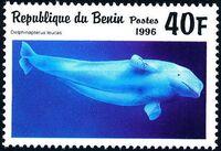 Benin 1996 Marine Mammals a
