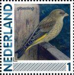 Netherlands 2011 Birds in Netherlands a17