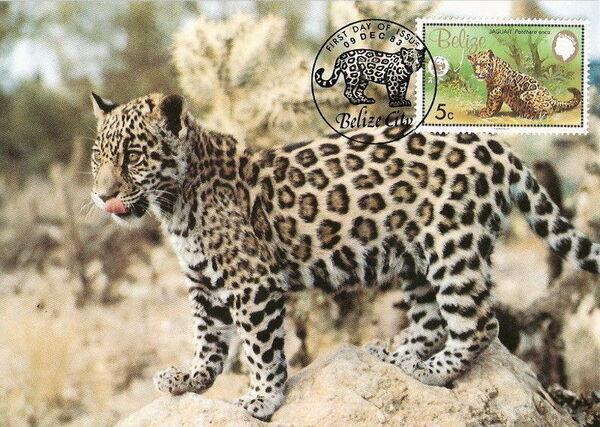 Belize 1983 WWF - Jaguar MCa