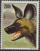 Rwanda 1981 Carnivorous Animals h