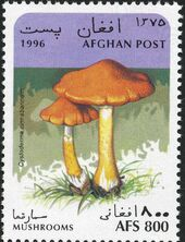 Afghanistan 1996 Mushrooms e