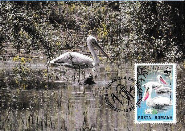 Romania 1984 WWF - Pelicans of the Danube Delta MCc