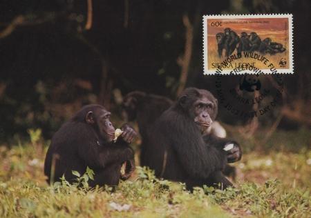 Sierra Leone 1983 WWF - Chimpanzees from Outamba-Kilimi National Park MCd