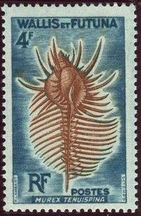 Wallis and Futuna 1962 Sea Shells d