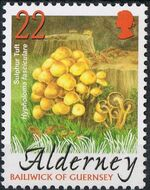 Alderney 2004 Mushrooms a