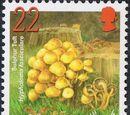 Alderney 2004 Mushrooms