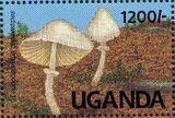 Uganda 1991 Mushrooms of Uganda k