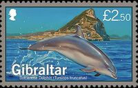 Gibraltar 2014 Dolphins c