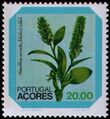 Azores 1981 Azores Flowers (1st Issue) c.jpg