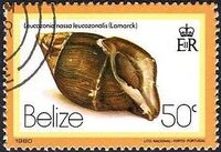 Belize 1980 Shells and Sea Snails l