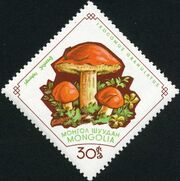 Mongolia 1964 Mushrooms e