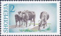 Albania 1965 Water Buffalo b