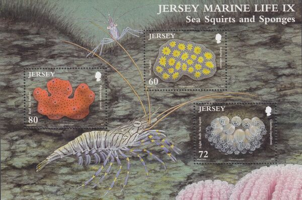 Jersey 2011 Jersey Marine Life IX - Sea Squirts and Sponges h