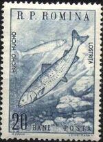 Romania 1960 Romanian fauna a
