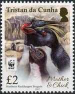 Tristan da Cunha 2017 WWF - Northern Rockhopper Penguin d