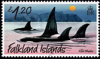 Falkland Islands 2012 Whales & Dolphins i