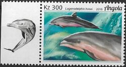 Angola 2018 Wildlife of Angola - Dolphins a