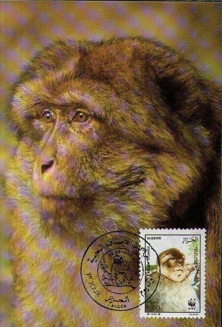 Algeria 1988 WWF - Barbary Macaque MCc