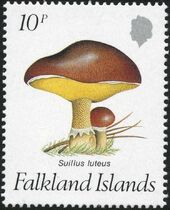 Falkland Islands 1987 Mushrooms a