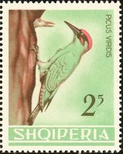Albania 1964 Birds d