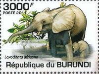 Burundi 2011 Elephants of the African Savanna d