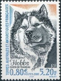 French Southern and Antarctic Territories 2000 Sled Dog Hobbs a