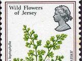 Jersey 1972 Jersey Wild Flowers
