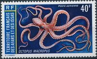 French Territory of the Afars and the Issas 1973 Marine Life a