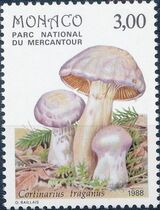 Monaco 1988 Fungi in Mercantour National Park f
