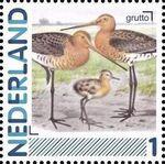 Netherlands 2011 Birds in Netherlands a22