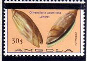 Angola 1981 Sea Shells Overprinted k