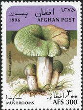 Afghanistan 1996 Mushrooms b