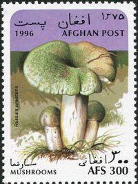 Afghanistan 1996 Mushrooms b