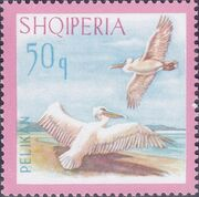 Albania 1967 Dalmatian Pelican e