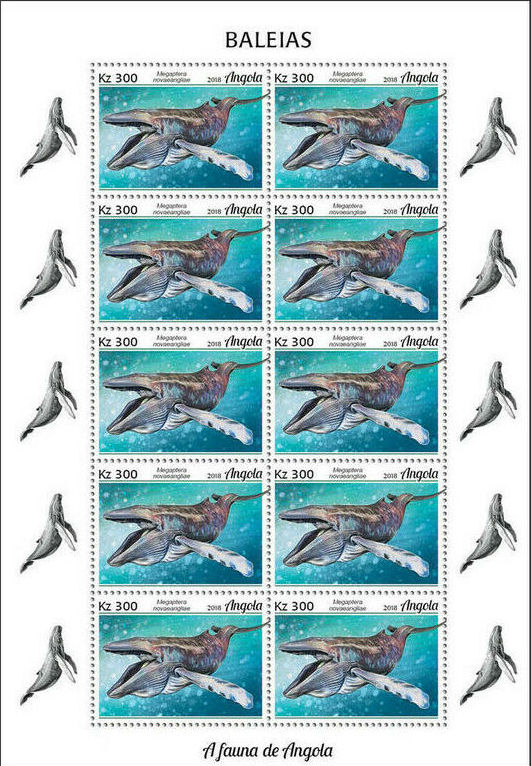 Angola 2018 Wildlife of Angola - Whales Sb