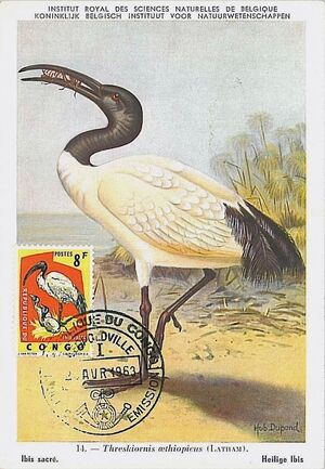 Congo, Democratic Republic of 1963 Protected Birds (1st Group) MCf