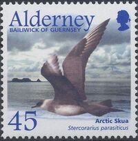 Alderney 2003 Migrating Birds Part 2 Seabirds e