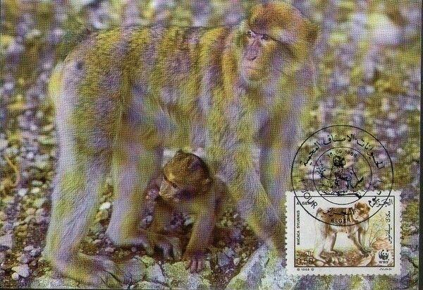 Algeria 1988 WWF - Barbary Macaque MCa