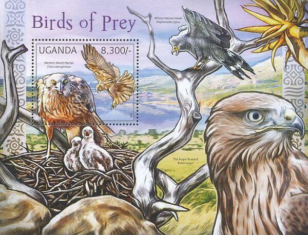 Uganda 2012 Fauna of African Great Lakes Region - Birds of Prey - Western Marsh Harrier g