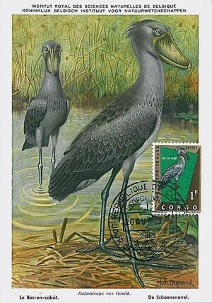 Congo, Democratic Republic of 1963 Protected Birds (1st Group) MCa