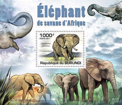Burundi 2011 Elephants of the African Savanna SSa