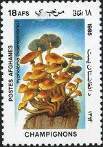 Afghanistan 1985 Mushrooms f
