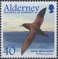 Alderney 2003 Migrating Birds Part 2 Seabirds d