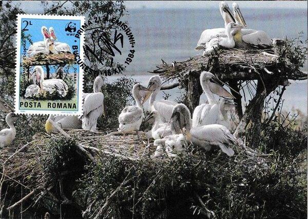 Romania 1984 WWF - Pelicans of the Danube Delta MCd