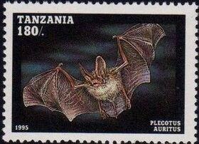 Tanzania 1995 Bats d