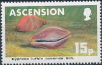 Ascension 1983 Sea Shells c