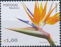 Madeira 2006 Madeira Flowers e